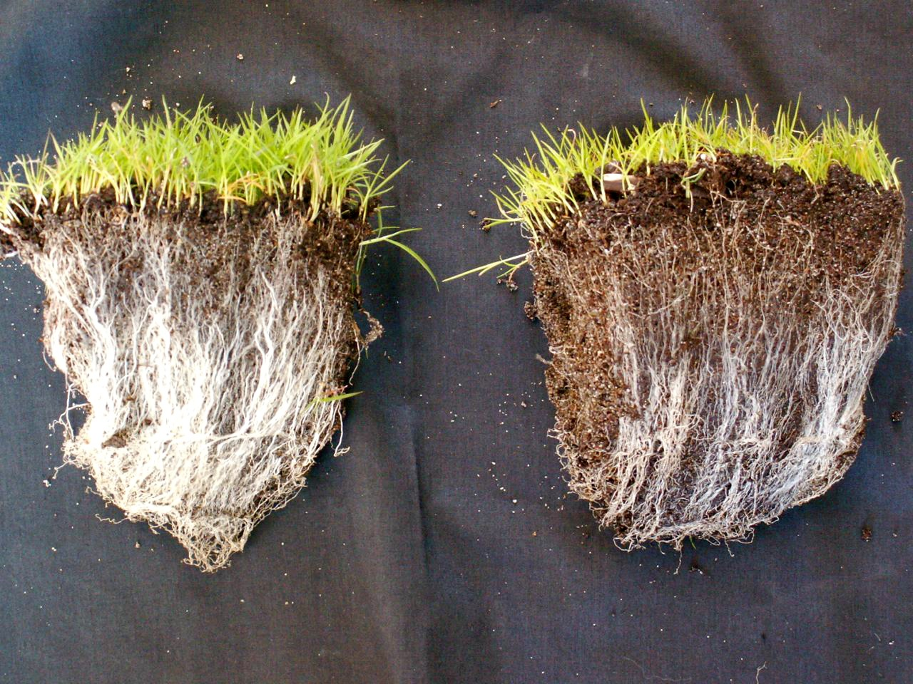 how to add mycorrhizae to soil