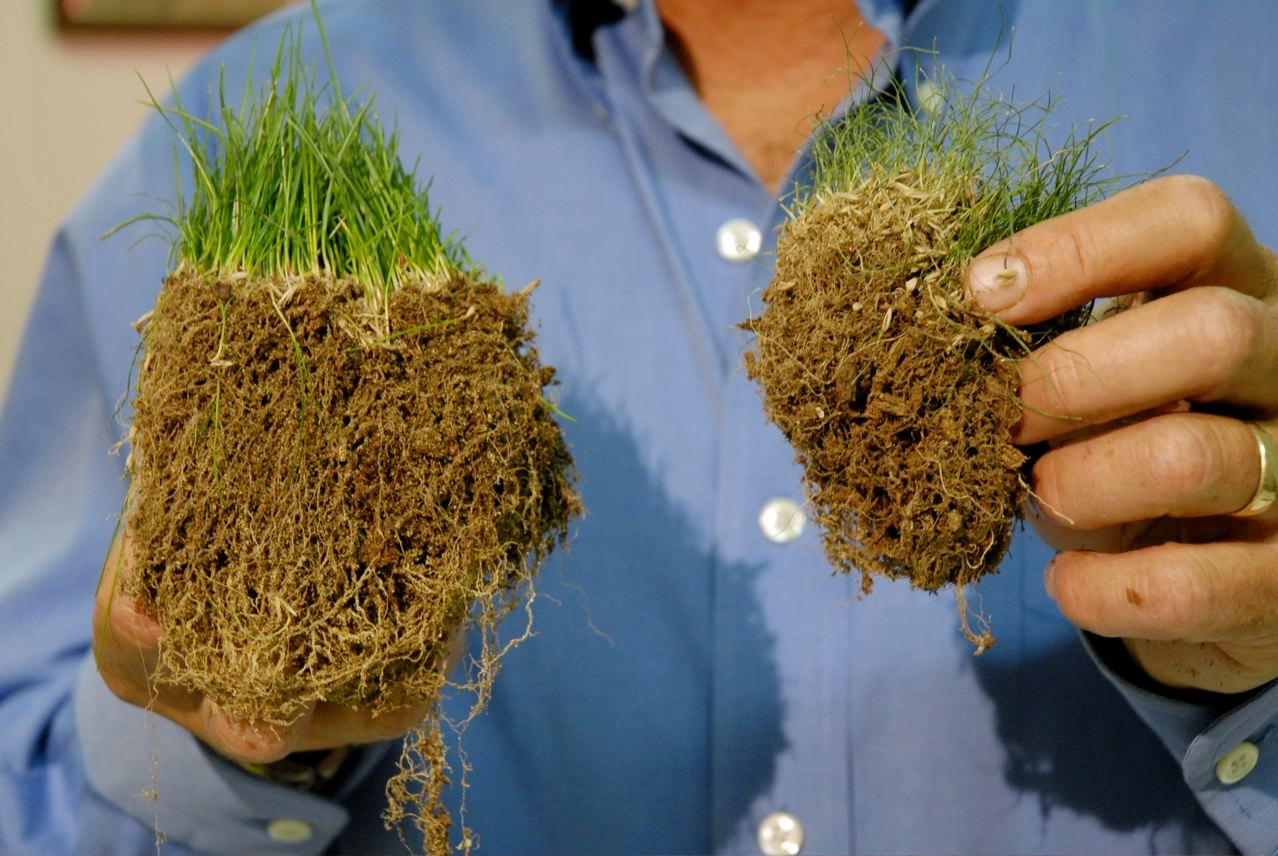 Turf root comparison