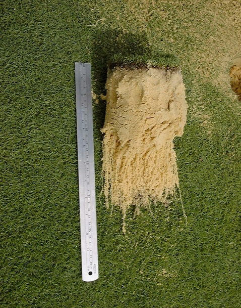 Turftrials-2004-treated